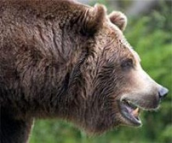 the bear in russian culture manners customs and traditions the bear a significant factor of russian culture appears in many russian literary works folk tales epics proverbs and sayings not infrequently